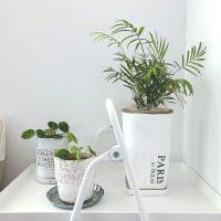 【ダイソー】お部屋にグリーンを置こう♪豊富なラインナップが嬉しいプチプラ観葉植物