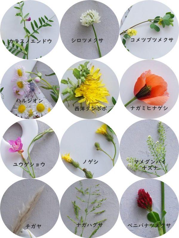 道端の草花3