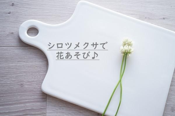 道端の草花6