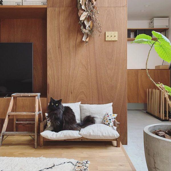 猫ちゃん専用のおしゃれなソファ