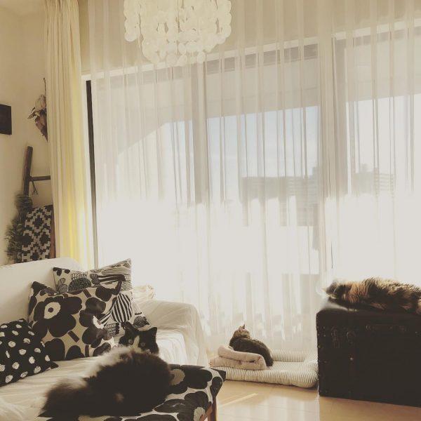 陽だまりが大好きな猫ちゃんスペース