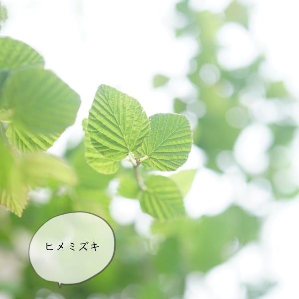長持ちするコスパの良い枝ものはコレ♪夏のグリーン紹介wwwx