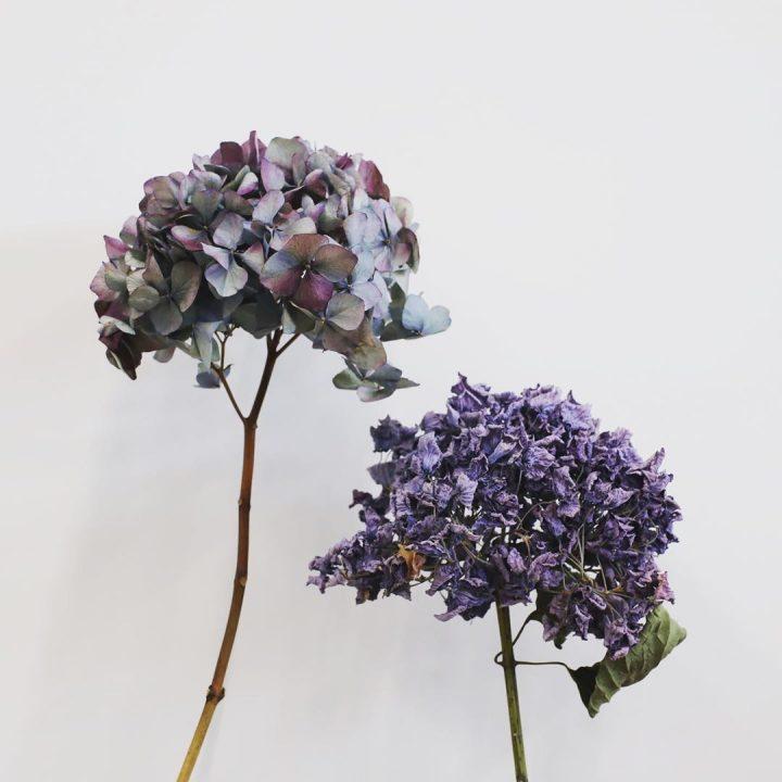 綺麗なドライフラワーになりやすい、お花の見分け方