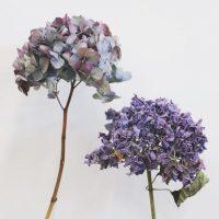 できるだけ、長く一緒に。ドライフラワー向きのお花の見分け方と、季節のおすすめドライフラワー5選