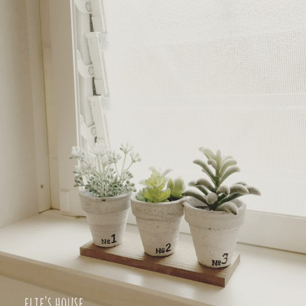100均の多肉植物で作る窓際インテリア