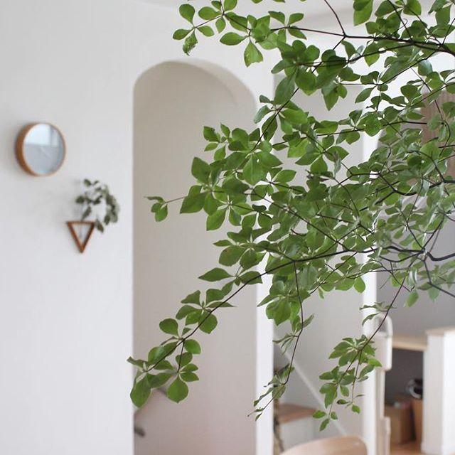 夏におすすめの枝物のインテリア