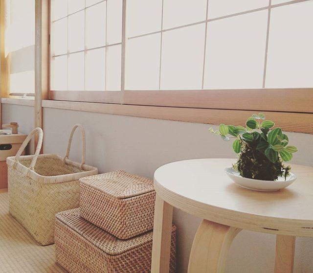 苔玉でシンプルな空間