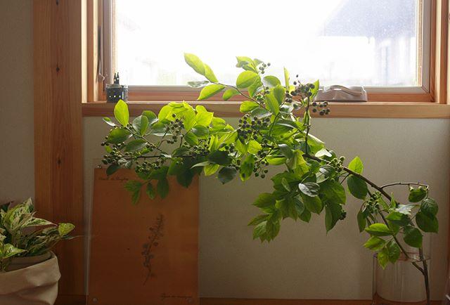夏におすすめの枝物のインテリア2