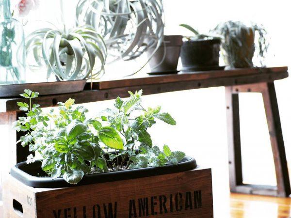 室内のグリーンにもおすすめの寄せ植えハーブ