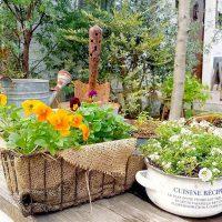 花壇に植える冬の花特集!ガーデニング初心者さんも育てやすい種類をご紹介♪