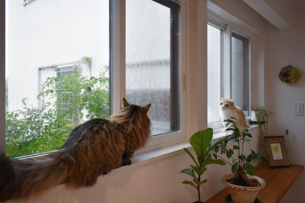 グリーン 猫 癒し インテリア8