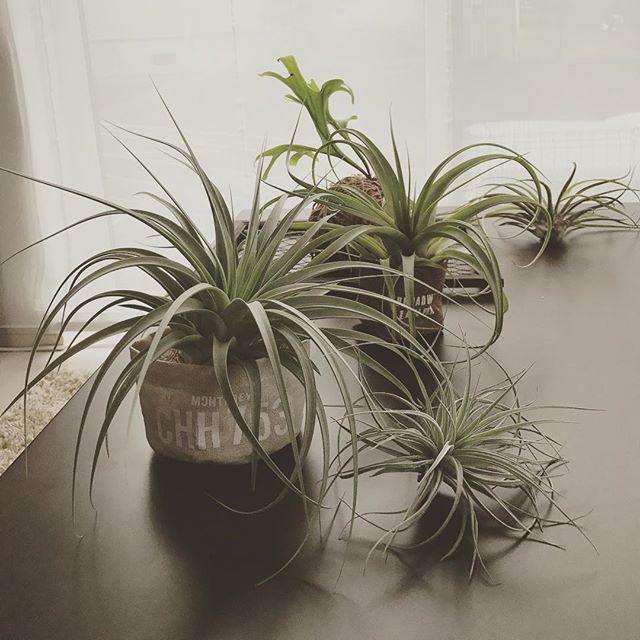 大人女子 おすすめ インテリア 植物4