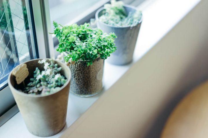 1. 日当たりは、植物の性質に合わせて変える