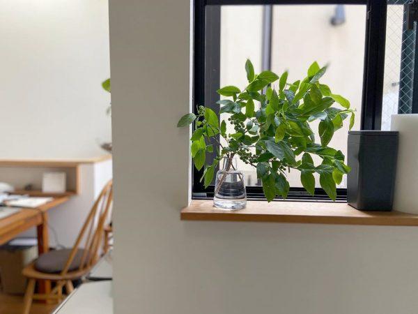 キッチン窓のグリーンが涼しげ