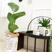 冬におすすめの観葉植物20選!寒さに強くて初心者でも手入れしやすいのは?