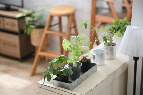観葉植物 ナチュラルインテリア3