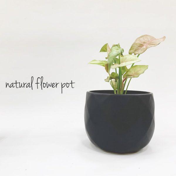 植木鉢10