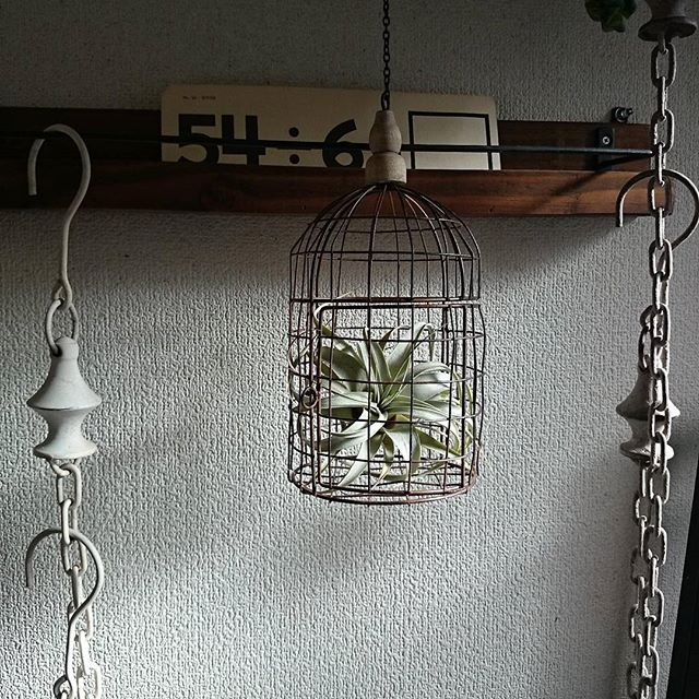 壁掛けの小物収納から観葉植物を吊るす