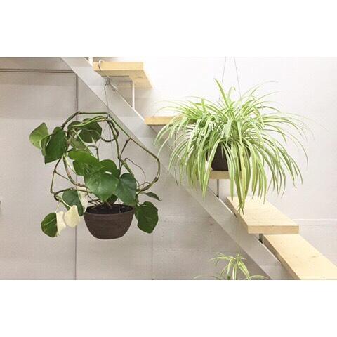階段や階段の手すりに観葉植物を吊るす方法