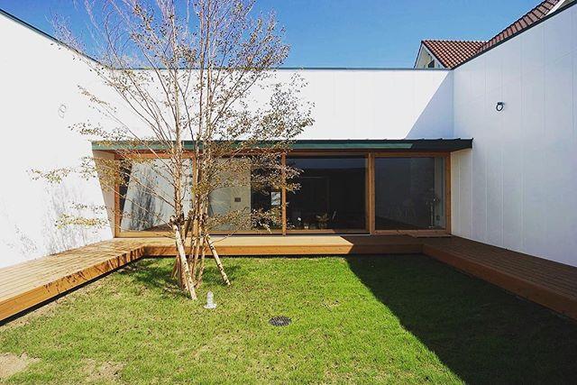 中庭のあるコートハウスのおしゃれな平屋実例