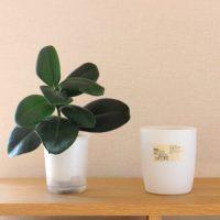【連載】《無印》の底面給水の観葉植物が便利でおしゃれ♪手軽にグリーンを楽しめる!