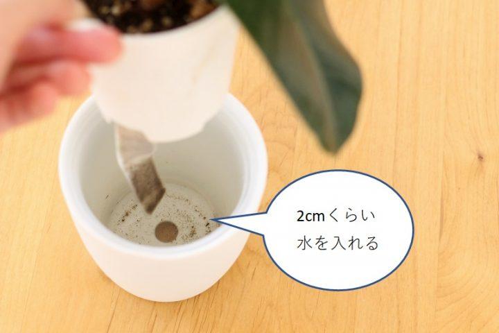 無印 底面給水 観葉植物4