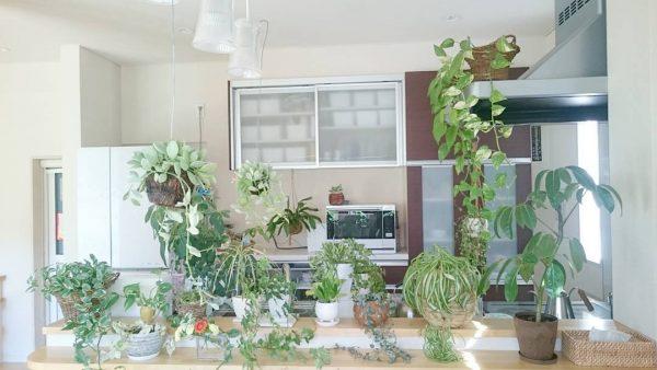 北欧キッチンにナチュラルさを与える観葉植物