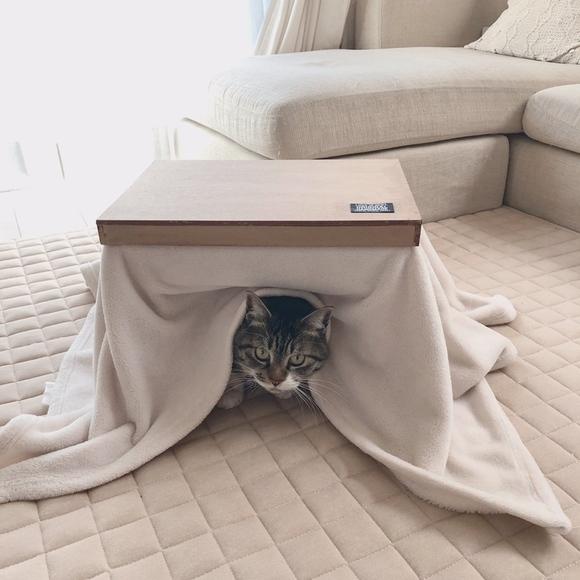 猫ちゃんにもぴったりの「なんちゃってこたつ」