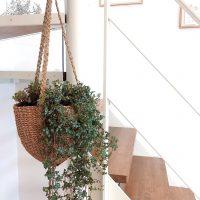 《ハンギンググリーン》が最高に可愛い♡観葉植物をインテリアに取り入れよう!