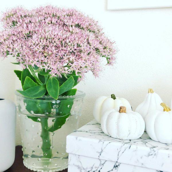 さりげなくハロウィンらしい白いかぼちゃ