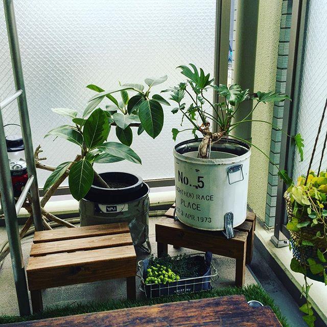 観葉植物を置いた癒しの空間