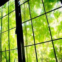 グリーンカーテンにおすすめの植物18選!初心者でも育てやすい花や野菜を紹介!