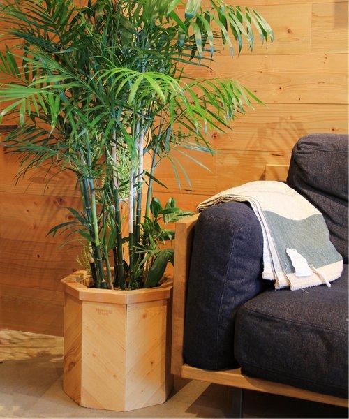 [JOURNAL STANDARD] PLT PLANTS BOX OCTA PLT-BX8S