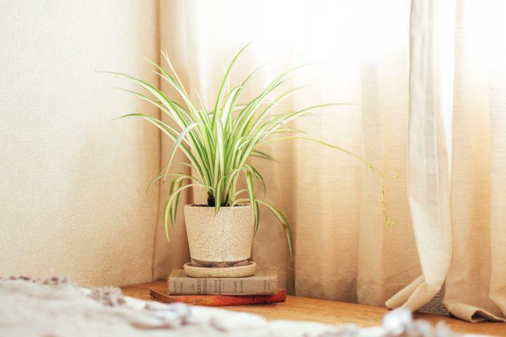 植物が溢れる空間にbnm