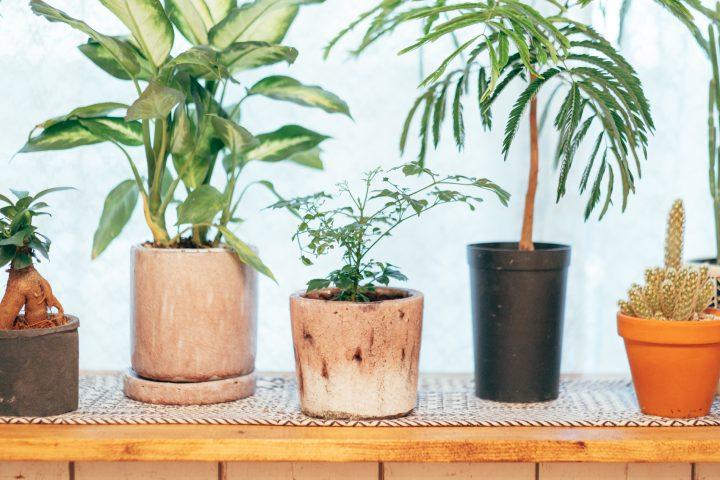 植物が溢れる空間に
