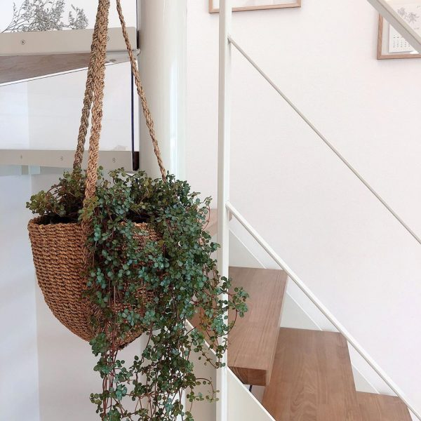 スケルトン階段に吊るすグリーン