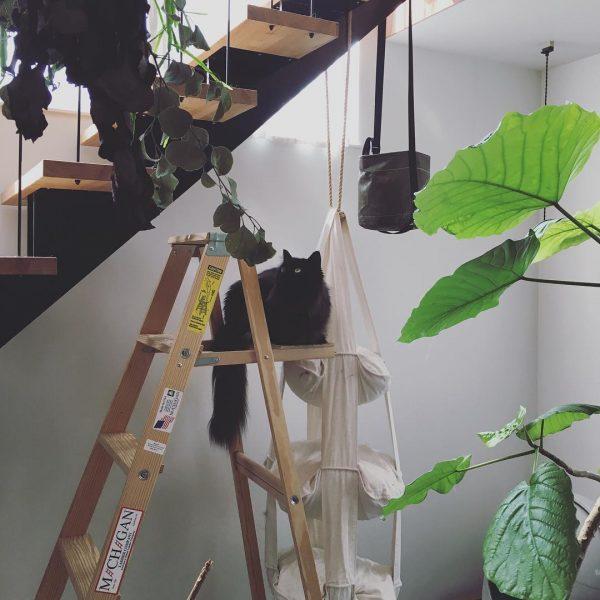 背の高い脚立は猫ちゃんお気に入りの場所