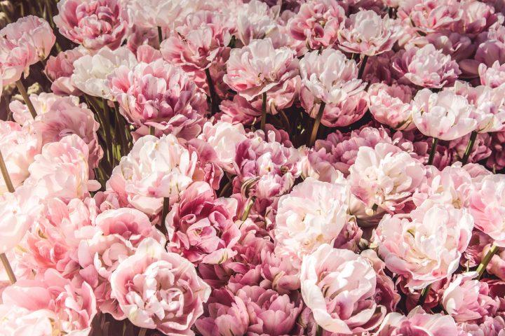 恋愛に関する花言葉