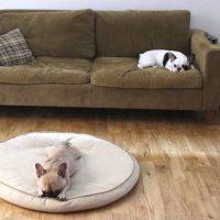 妥協しない!ペットとおしゃれに暮らすためのアイテム・収納アイデア特集