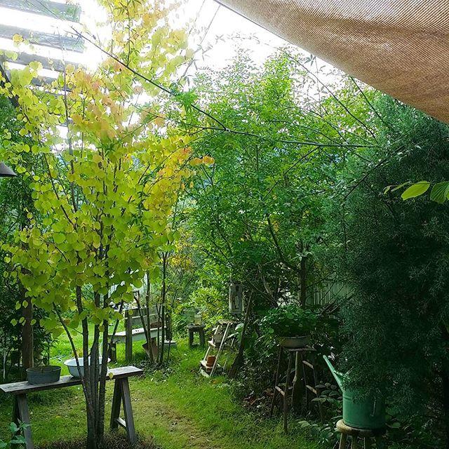 シンボルツリーにおすすめの庭木9