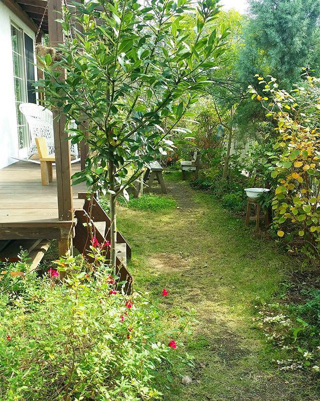 月桂樹でインパクトを出したお庭レイアウト