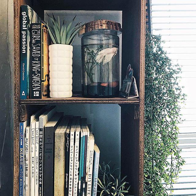 観葉植物と一緒にアルバムを収納