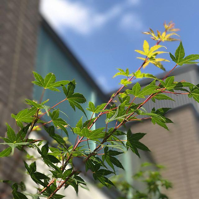 シンボルツリーにおすすめの庭木10