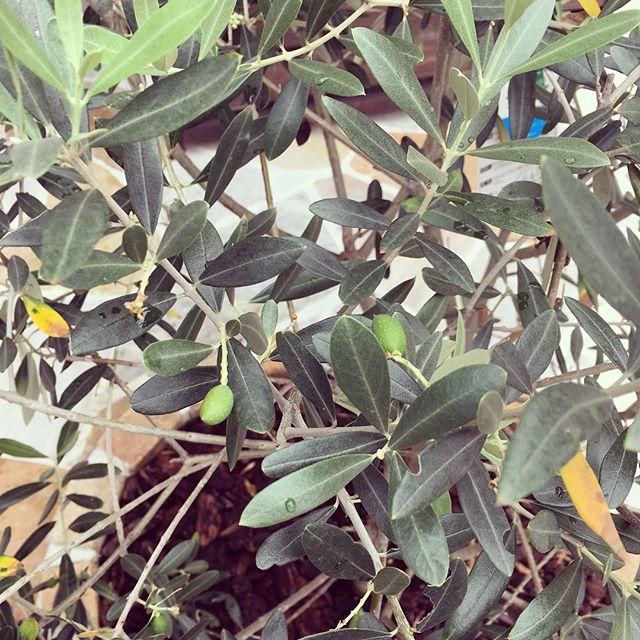 シンボルツリーにおすすめの庭木6