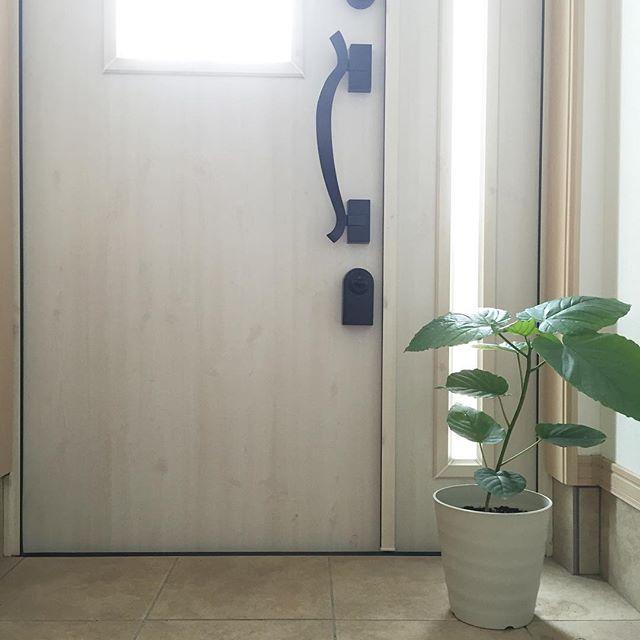 東向き 玄関 風水 植物2
