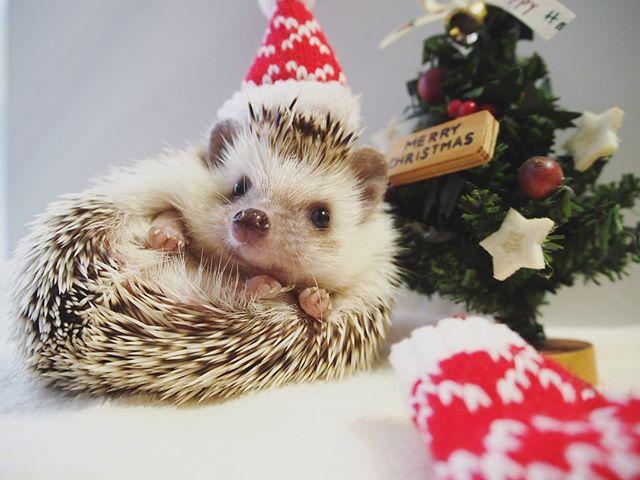 クリスマスのアイディア10