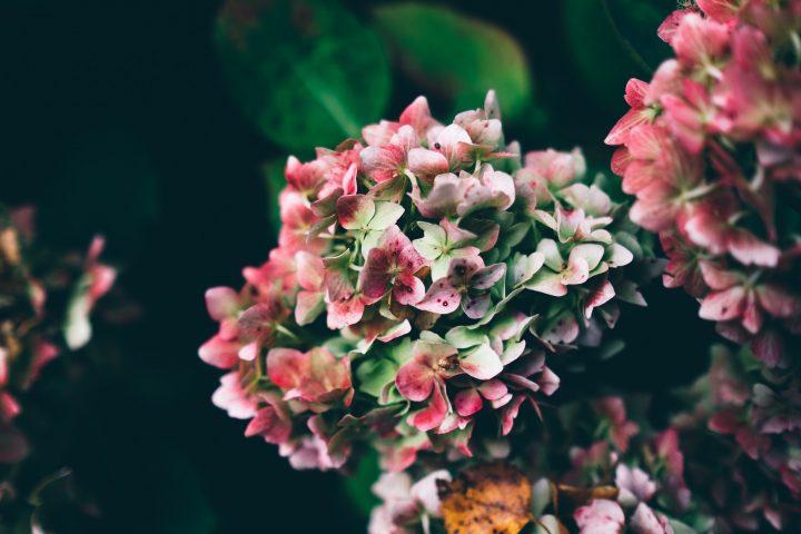 秋らしい花で部屋を彩ろう