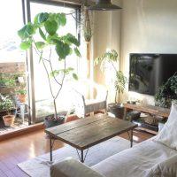 風水的に縁起の良い観葉植物の飾り方は?場所別に運気を呼び寄せる飾り方をご紹介!
