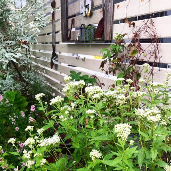 狭い庭 ガーデニング フェンス・アプローチ