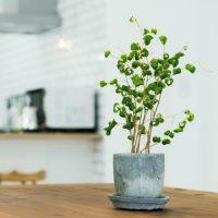 風水的に良い玄関におすすめの観葉植物15選!小さめサイズや日陰で育つグリーンも♪